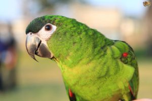 Macaw-Bolivian-Green-Parrot-Who-Is-That