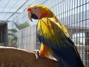 Macaw-Camelot-Parrot-In-Prison