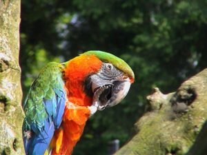 Macaw-Camelot-Parrot-Snack