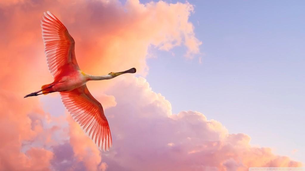 beautiful_birds_flying-wallpaper-1920x1080