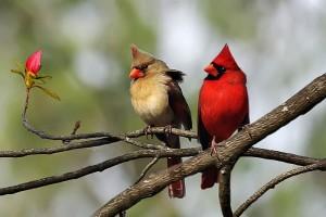 cute-bird-breeds